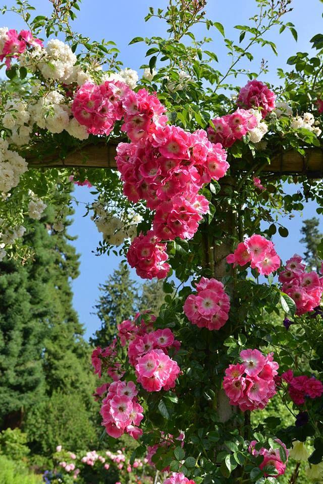 1230 best Blumen images on Pinterest | Beautiful flowers, Flower ...