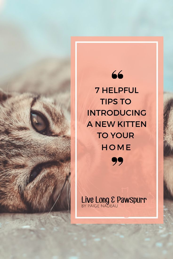 7 Helpful Tips For Introducing A New Kitten To Your Home Cat Training Kittens Getting A Kitten