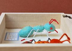 Red Toed Ant (hine) Tags: show blue red art bug insect toy geek handmade ant craft felt science exhibition plush softie specimen needlefelt hine nuigurumi hinemizushima