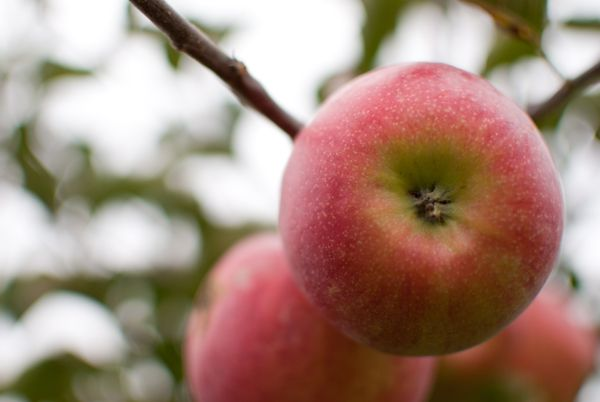 alma, édes #alma #pirosalma
