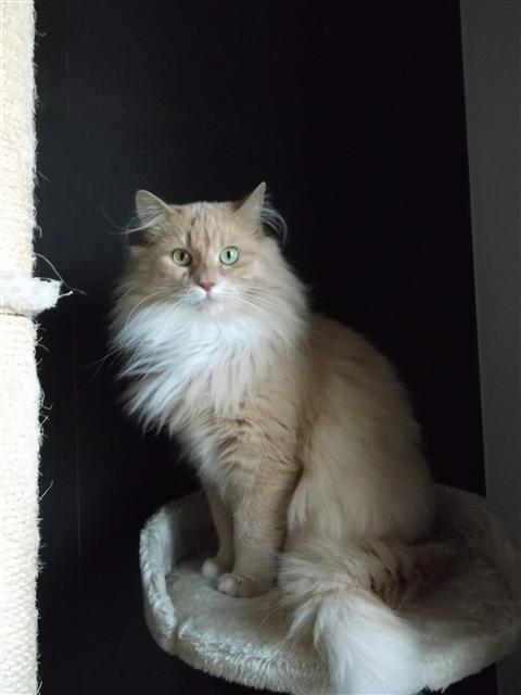 Elegant cat...Ah hah! Mufasa has been moonlighting!