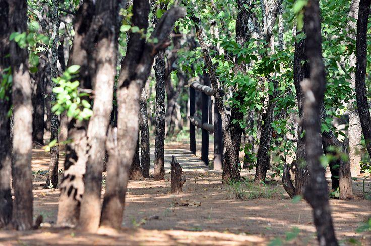 Still Life - Kruger National Pk. S.A.