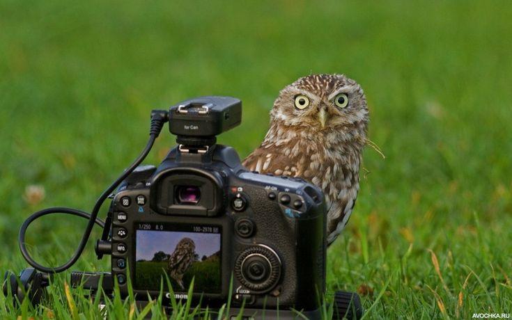 Картинка с совой с фотоаппаратом - Картинки и фото на Avochka.ru