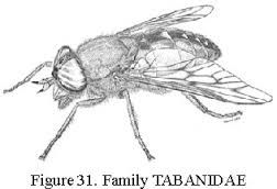25 Best Ideas About Deer Flies On Pinterest Deer Information Natural Fly Repellant And Black Fly