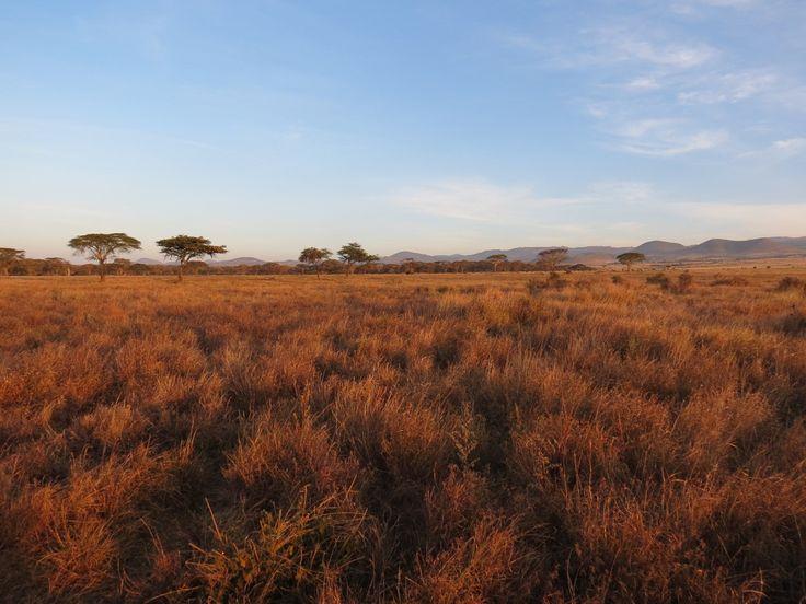 The Lewa Plains
