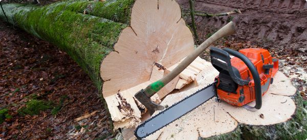 How Much Does Tree Removal Cost? | Redbeacon
