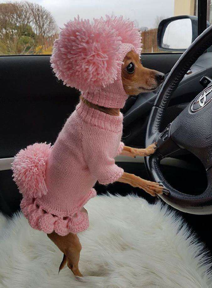 """Signs you're in a bad relationship with your owner and you want out """" Like dressing you up like the child she'll never have """""""