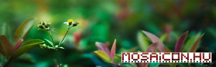 Növények Facebook borítókép