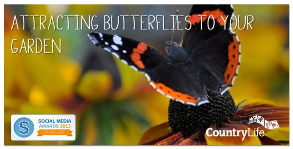 Read Angela's blog on examples of host plants and feeding plants that attract our more common Irish butterflies... #butterflies #gardening #tips