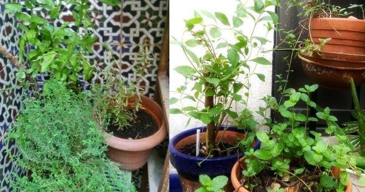 Cómo regar las plantas con agua reciclada y aportar los nutrientes necesarios