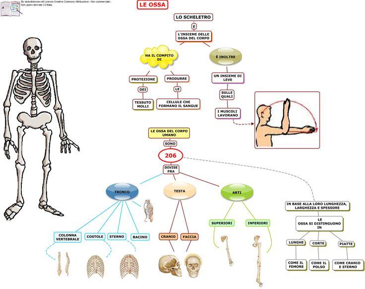 Apparato Scheletrico Sc. Media | AiutoDislessia.net