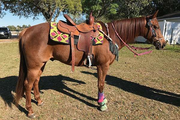 For sale: Handsome 10 year old *kid safe* all around horse. Competed in NBHA and Youth rodeo (barrels and poles). Has been jumped and roped off of.  14.2 hands. Easy keeper. Loves to trail ride, clips, ties, UTD on all vacs & teeth. Great starter horse. Beginner safe.