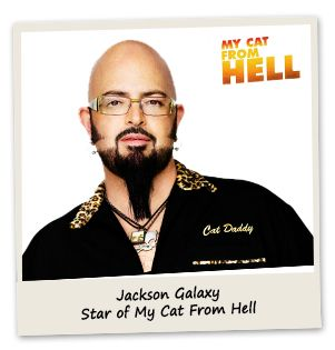 17 best images about cat from hell show on pinterest for Jackson galaxy phone number