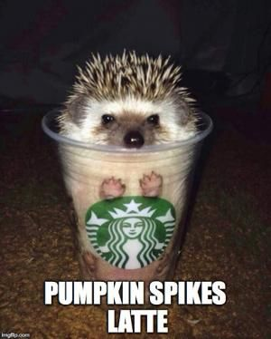 Pumpkin spikes latte