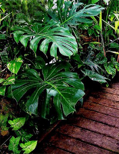 21 best images about tmol on pinterest hedges jasmine. Black Bedroom Furniture Sets. Home Design Ideas