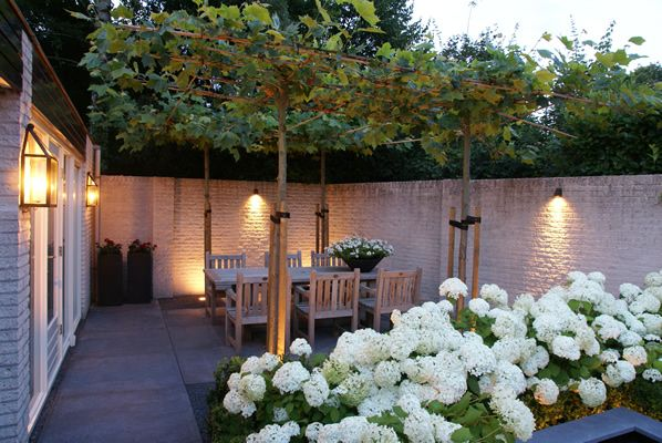 Gardens by Teus Timmer fotoboek: Patio tuin--Love this little courtyard, and the way they have trained the trees/vines to resemble a pergola...