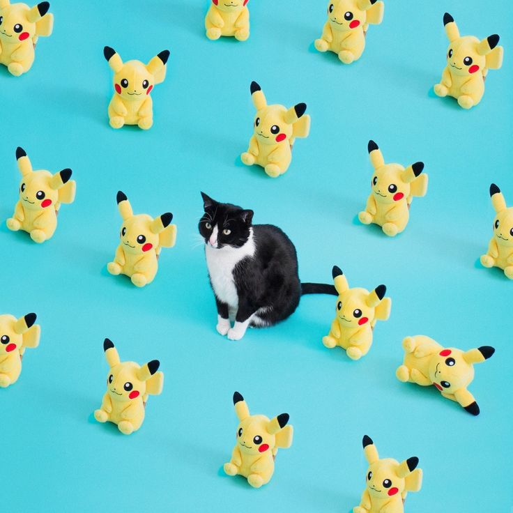 Pika-Cheet ⚡️ Pikachu  Cat