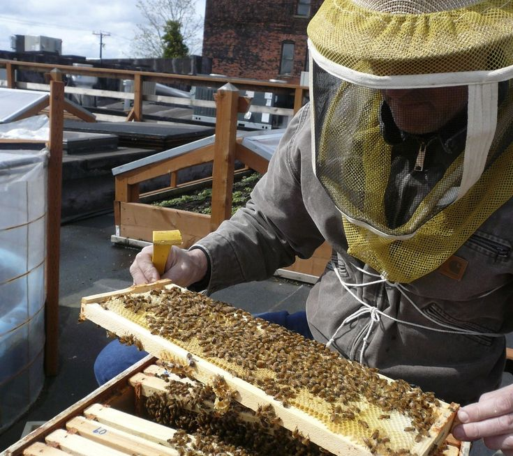 "Have you considered putting in a beehive, but worried that you might not have the time to maintain it? If you live in Seattle, you're in luck. Once a month, Corky Luster's Ballard Bee Company will install a hive, care for the bees, and harvest the honey for you. ""It's like having a lawn service, …"