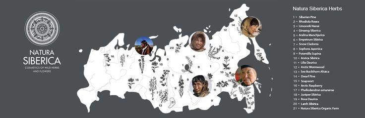 natura siberica new year - Google Search