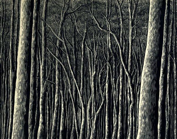 Rosalind Atkins Australian B 1957 Penders Forest 2011