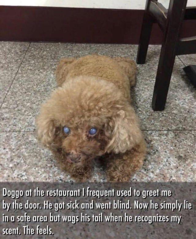 Funny Dog Stories Reddit