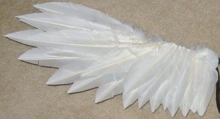 Feather Wings Tutorial @ Paper Wings Cosplay