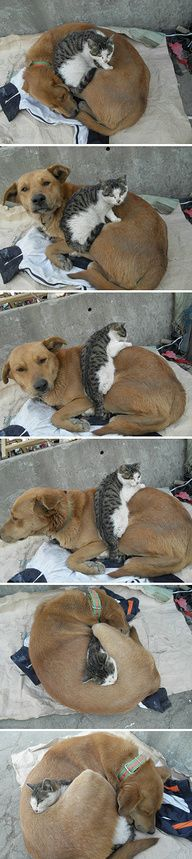 love love: Dogs And Cat, Best Friends, Snuggle, Dogs Cat, Pet, My Heart, Cuddling Buddy, So Sweet, Animal