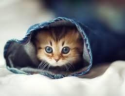 Top 20 Plus beaux bébé animaux., Tooply