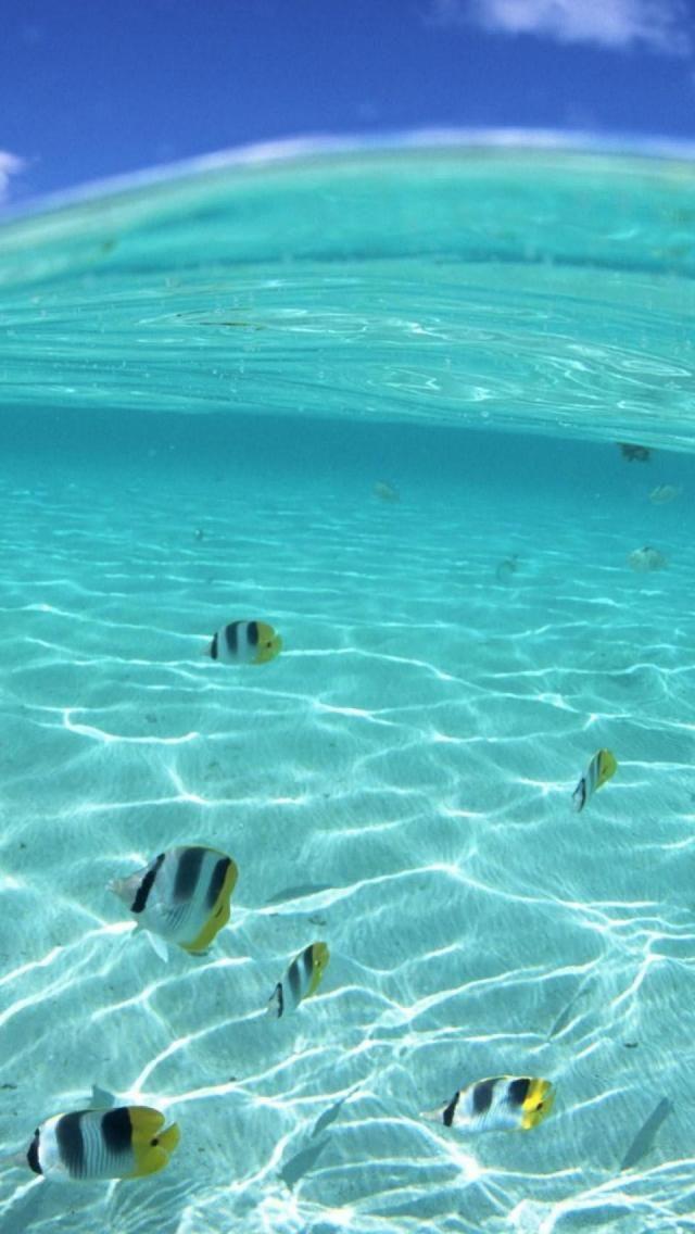 Fish, Underwater, Tropical, Sea, Hawaii