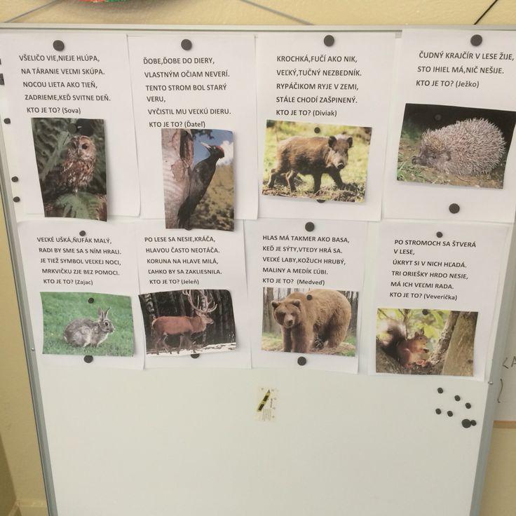 Hádanky zvieratá v lese