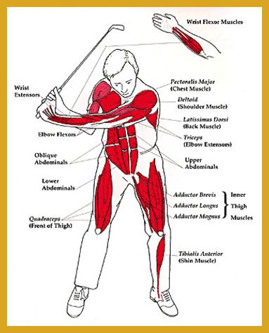 Golf Exercises - Can You Play Quality Golf Without Fitness and Exercise? >>> You can get additional details at the image link. #vegan