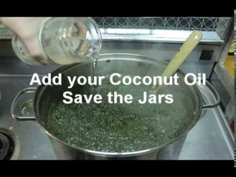 Why the Cannabis Coconut Oil is So Powerful and Effective? | Health Nut News