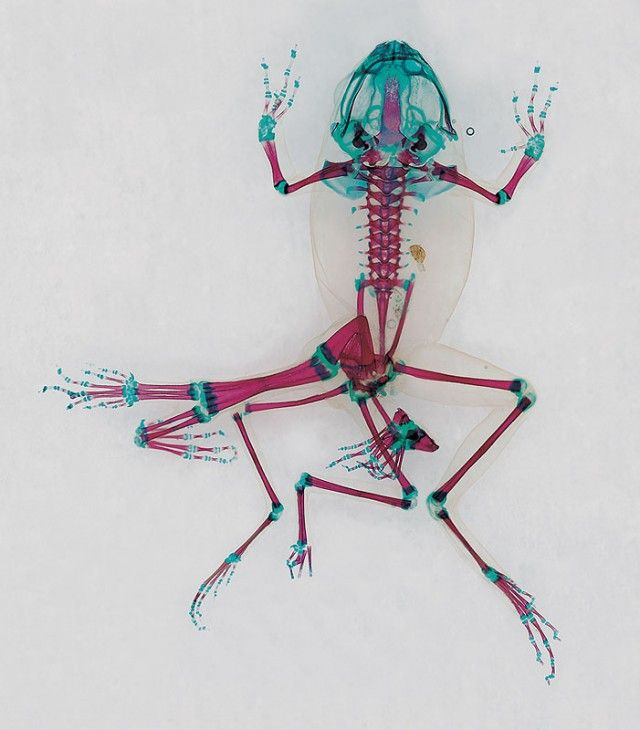 http://www.fubiz.net/2014/02/27/frogs-reliquaries-from-nature/