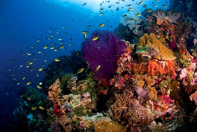 Pristine Technicolour Reef in Wakatobi, South Sulawesi, Indonesia. Want to Dive & travel around Asia get in touch & we can make it all happen. info@divesafariasia.com