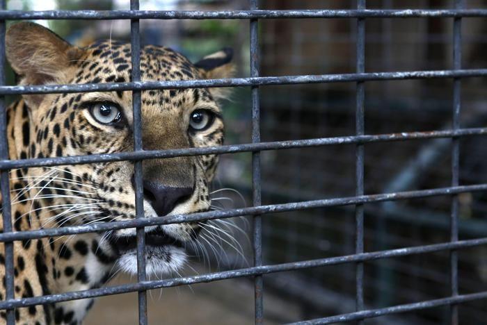 http://www.premviaggindia.com/india-donna-uccide-leopardo/