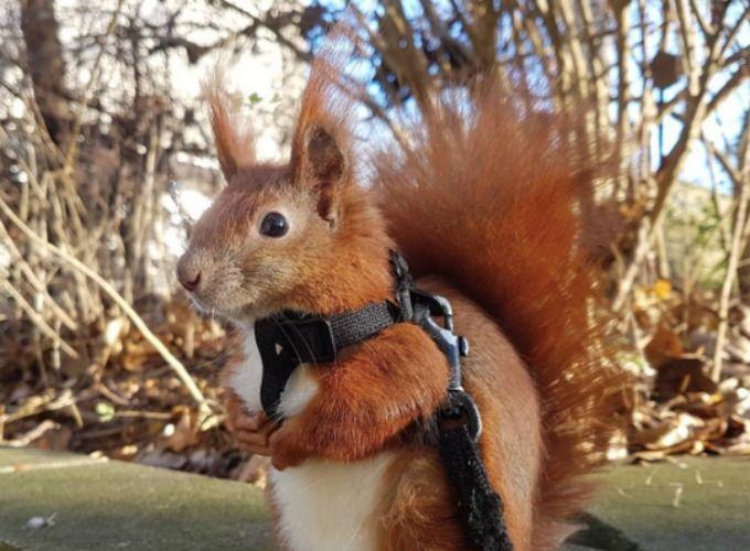 Découvrez l'histoire touchante de Tintin l'écureuil - Yummypets