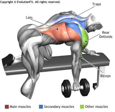 LATS - ONE ARM DUMBBELL ROW ON FLAT BENCH