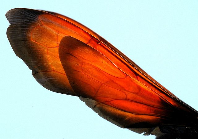The Tarantula Hawk - Ruthless 'Raptor' of the Insect World | The Ark In Space
