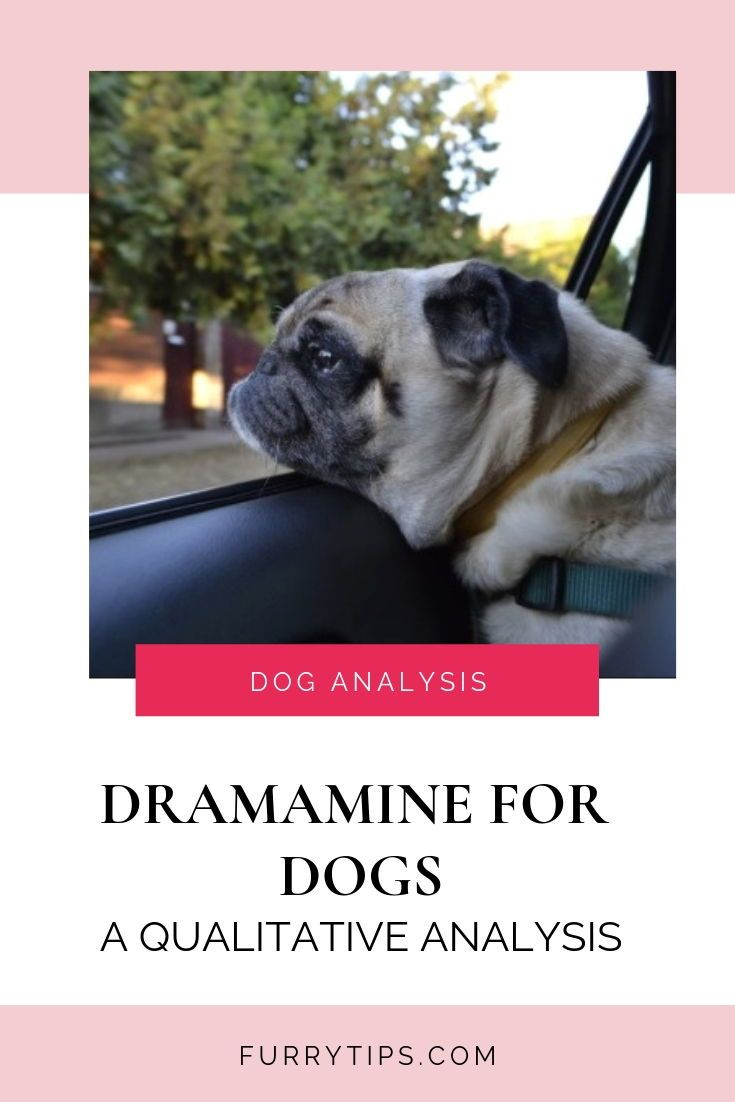 Dramamine For Dogs A Qualitative Analysis Dramamine For Dogs