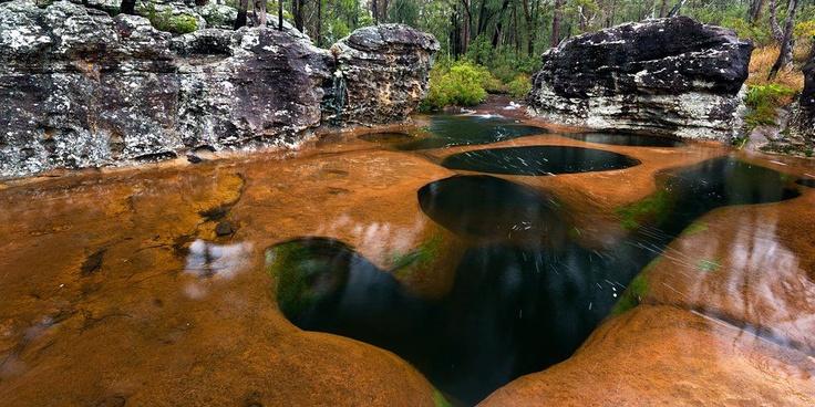 Blackdown Tablelands, Central Queensland. Photo Mitchell Burns.jpg