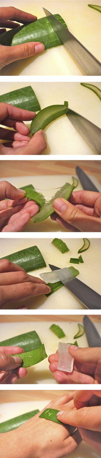 Seven ways to use Aloe Vera