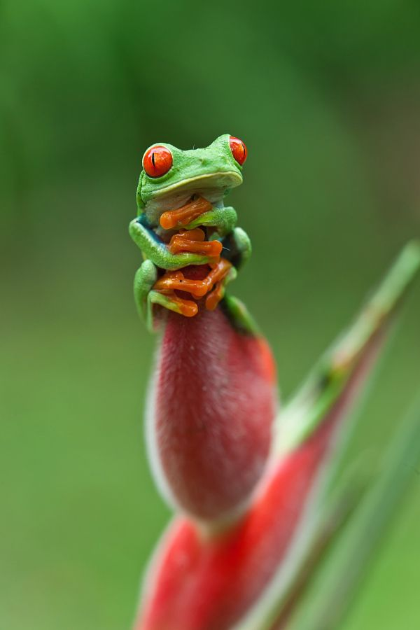 Ultimate Collection of Wildlife Photos