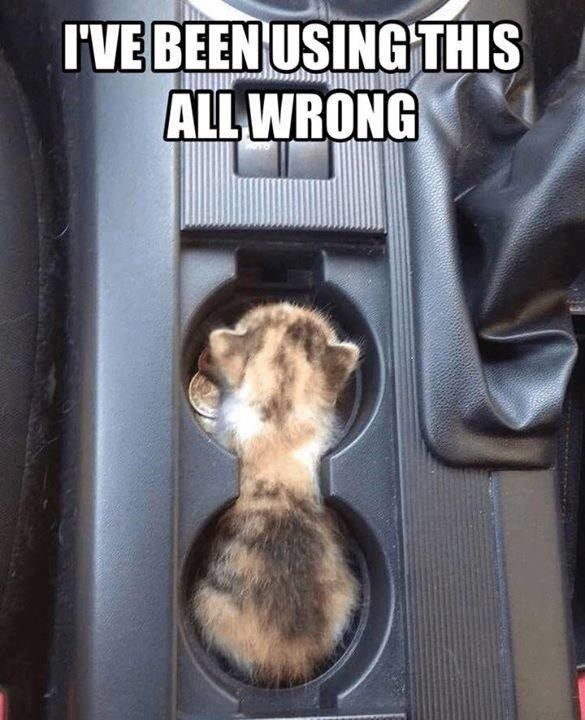 Ohhh So That S What It S For Kittens Funny Cute Animals Cute Funny Animals