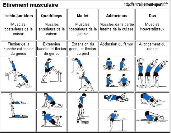 Les étirements musculaires font partie des exercices de l'échauffement sportif http://entrainement-sportif.fr/echauffement.htm#etirement