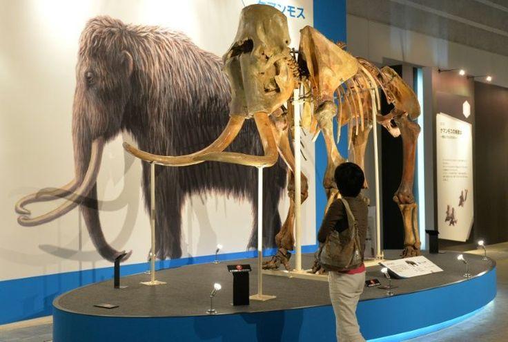 Marcas de pontas de flechas e outros objetos pontiagudos observados na carcaça congelada de um mamute indicam que a presença humana no Ártico é mais antiga do que se pensava