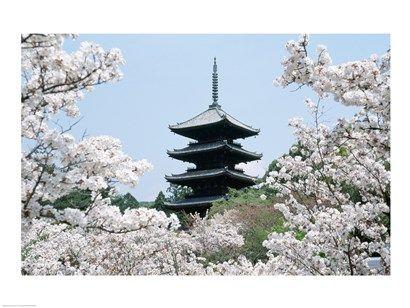 Cherry Blossoms Ninna-Ji Temple Grounds Kyoto Japan