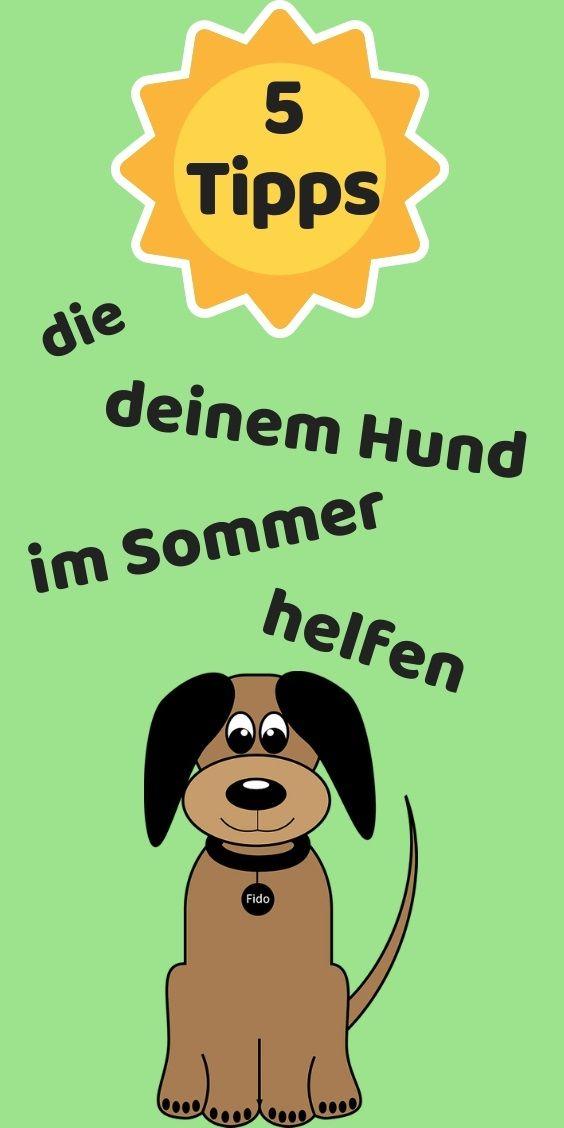 Hund Im Sommer 5 Tipps Meinhund24 Hunde Hundepflege Eis