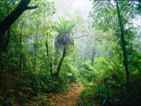 Green Mountains, Lamington National Park, in the hinterland of the Gold Coast and part of the Gondwana Rainforests of Australia World Heritage Area, draws hundreds of thousands of visitors each year to its waterfalls, wildlife and wonderful walking tracks. Pick up the latest brochure from the information centre and enjoy walking tracks (from one kilometre to 22 kilometres in length) leading to creeks and lookouts. Stay overnight in the Queensland Parks and Wildlife Service's camping area…