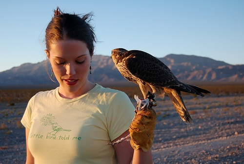 how to catch a red tailed hawk for falconry