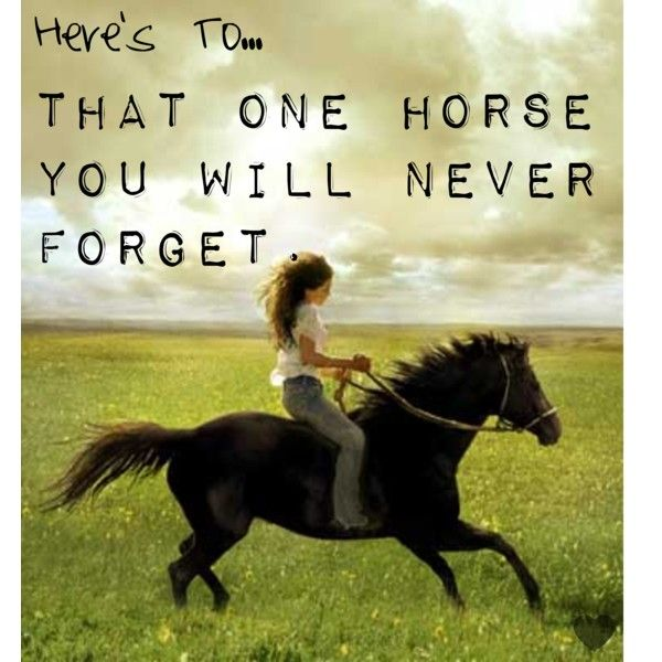 The best horse ever Marching On.  A 13 year old Saddle Bred that saved my life.